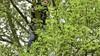 Vrouw klimt haar kat achterna in hoge boom en moet gered worden door brandweer in Voorschoten