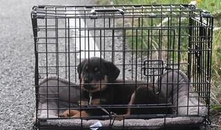 Bestuurder naar het ziekenhuis na frontale botsing in Leiderdorp, puppy niet gewond