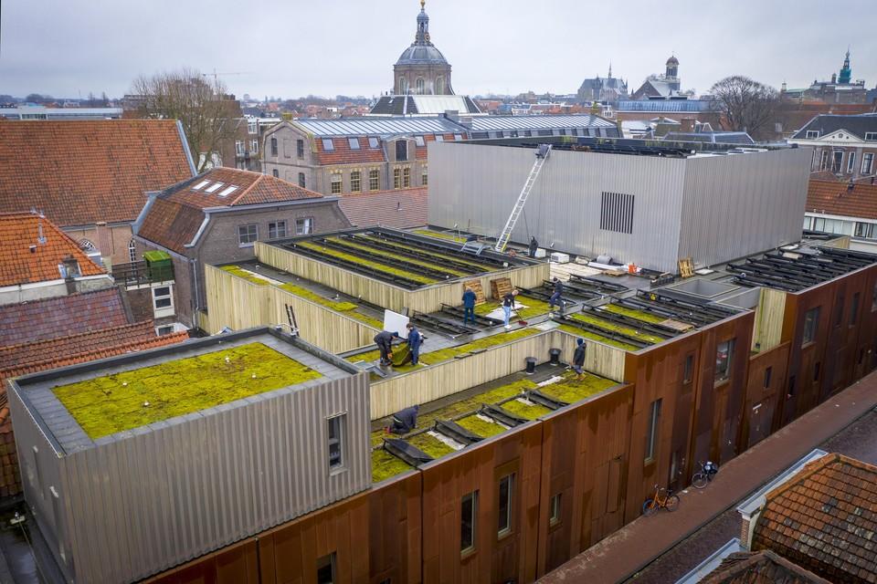 Het dak van Gebr. de Nobel tussen de Lange Scheistraat en de Marktsteeg in Leiden ziet er sinds deze week een stuk groener uit