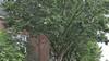 Smalle stoepen Leidse Hugo de Grootstraat onbegaanbaar door 'woudreuzen'. 'Mensen met een rollator moeten om de haverklap de straat op'