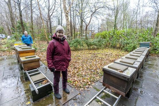 Vandalisme bijenkasten Oud Poelgeest kan tienduizenden bijen het leven kosten
