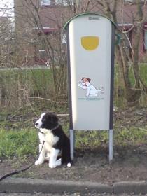 Leidse regels rond hondenpoep werpen hun vruchten af
