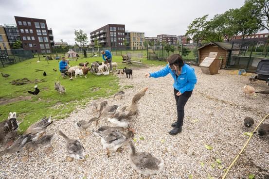 Particulier initiatief voor behoud dierenweide Rijnsburg