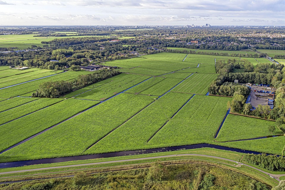 Gemeente Wassenaar accepteert geen hoge flatgebouwen tegen de rand van de Groene Zone (tussen het nieuwe dorp Valkenhorst en Wassenaar).