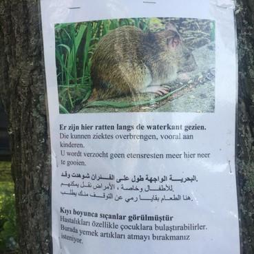 Actie tegen ratten bij Het Gebouw in Leidse Surinamestraat
