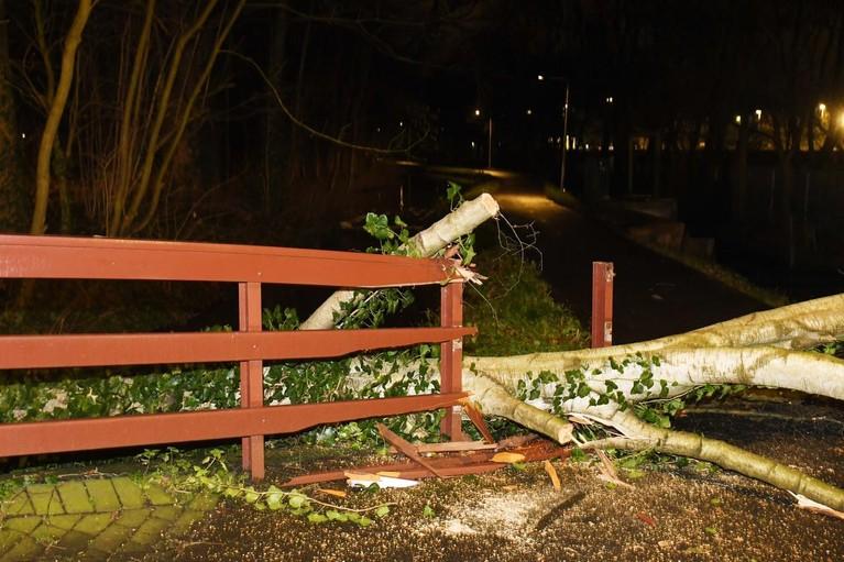 Omgevallen boom richt nodige schade aan in Leiden