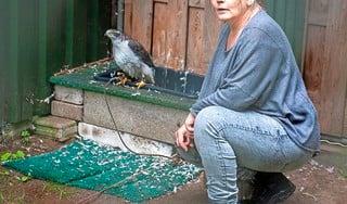 Gewonde dieren worden opgelapt bij roofvogelopvang Barchem en gaan, zoef, terug het luchtruim in