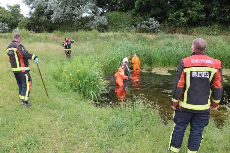 Grote zoekactie naar vermiste Anja Schaap in Katwijks duingebied levert niets op [video]