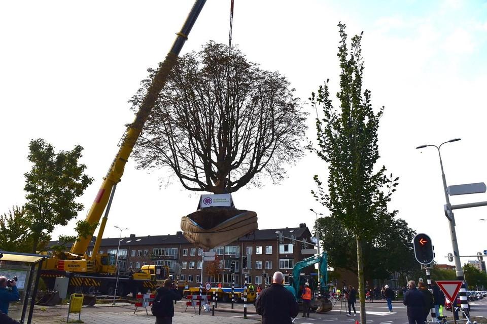 De kastanjeboom werd door een hijskraan op een oplegger geplaatst, en reed vervolgens naar een nieuwe locatie 200 meter verderop.