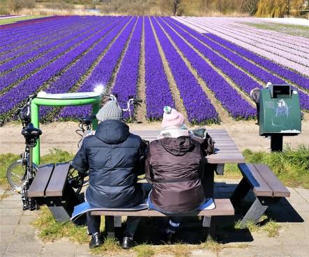 Zeldzame toeristen genieten van bloeiende bollenvelden