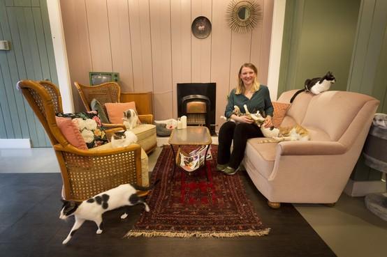 'Dit kattencafé verbindt mensen met elkaar'