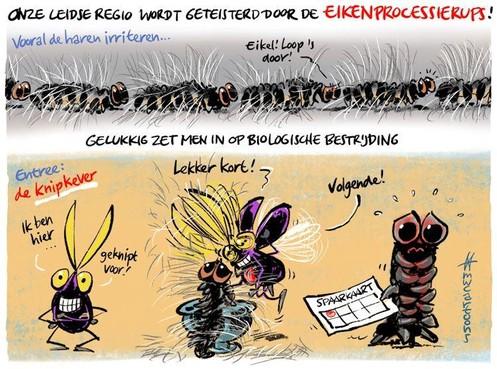 Cartoon: Geknipte vijand voor de eikenprocessierups