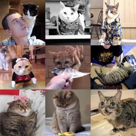Primeur: kattenfilmpjes kijken in het filmtheater. Het is nu al razend populair