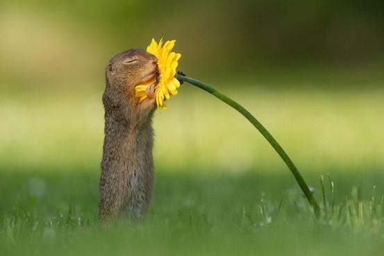 Noordwijker klikt meesterlijke foto: Van Duijns eekhoorn gaat hele wereld over