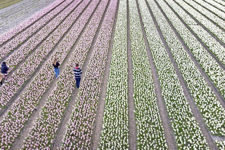 Bezoekers nemen foto's tussen de bloemen.