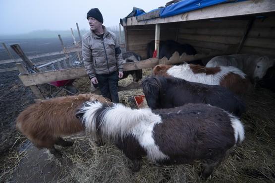 Voorschotenaar met pony's nu naar Valkenburg: 'Dat gesleep met die dieren breekt me op'