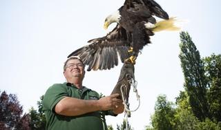 Roofvogels en zorgjongeren zijn de spil in het bestaan van Rijnsburger Brian Bouman
