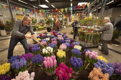 Kleurige resultaten van huisbroei ingeleverd tijdens opbouw Lenteflora in Lisse