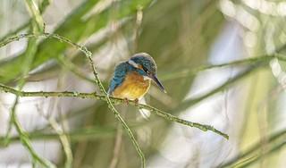 IJsvogeltjes zetten leven ArTjan Zandbergen van tuincomplex Ons Buiten op stelten [video]