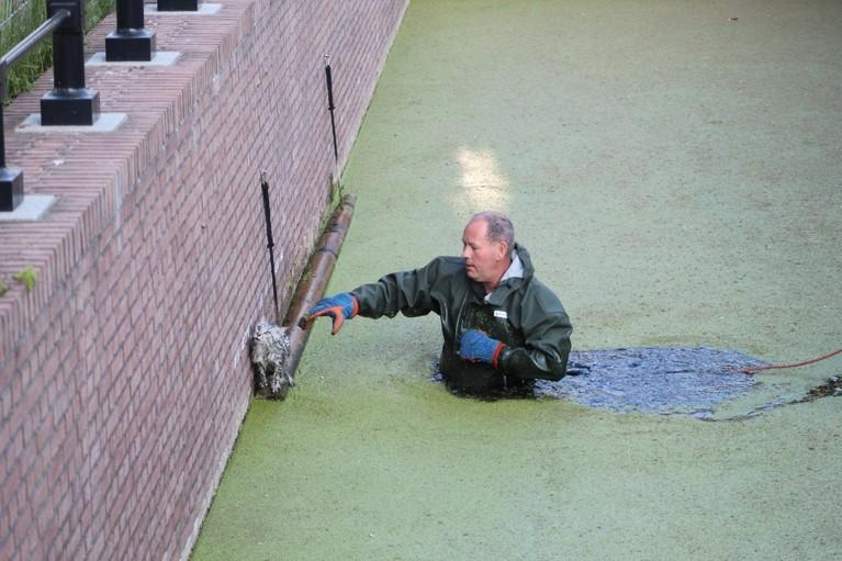 Brandweer redt kat in Noordwijk