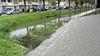 Wethouder belooft 'bijenvoedselbank' aan Leidse Surinamestraat dit jaar niet te maaien