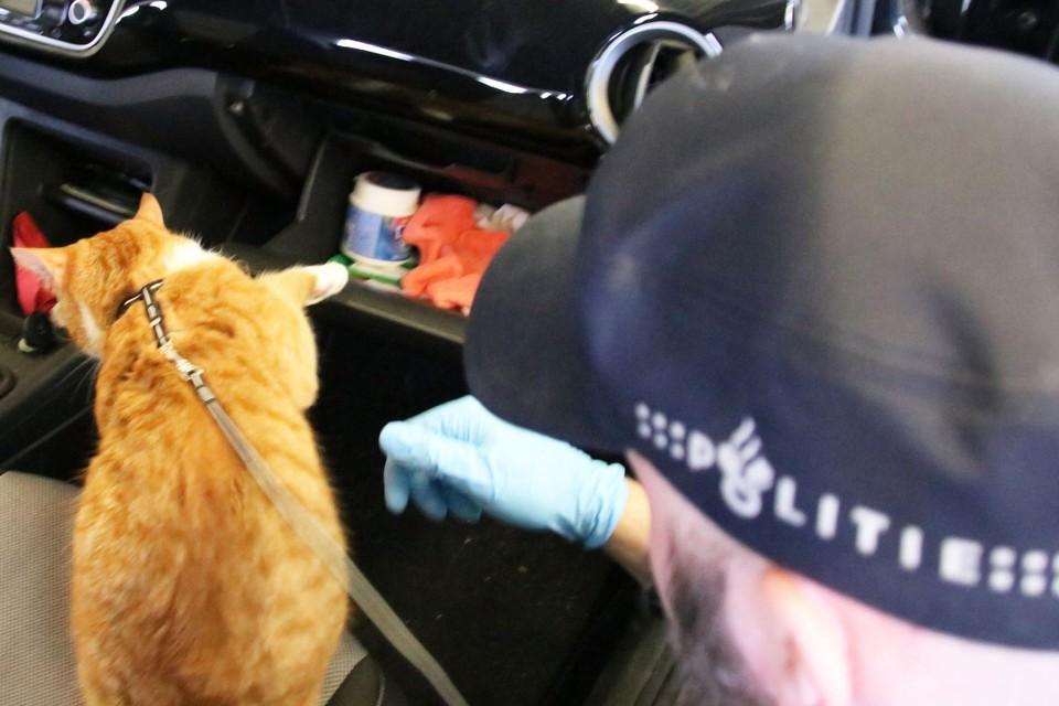 Een agent met een nieuwsgierige huiskat aan een tuigje.