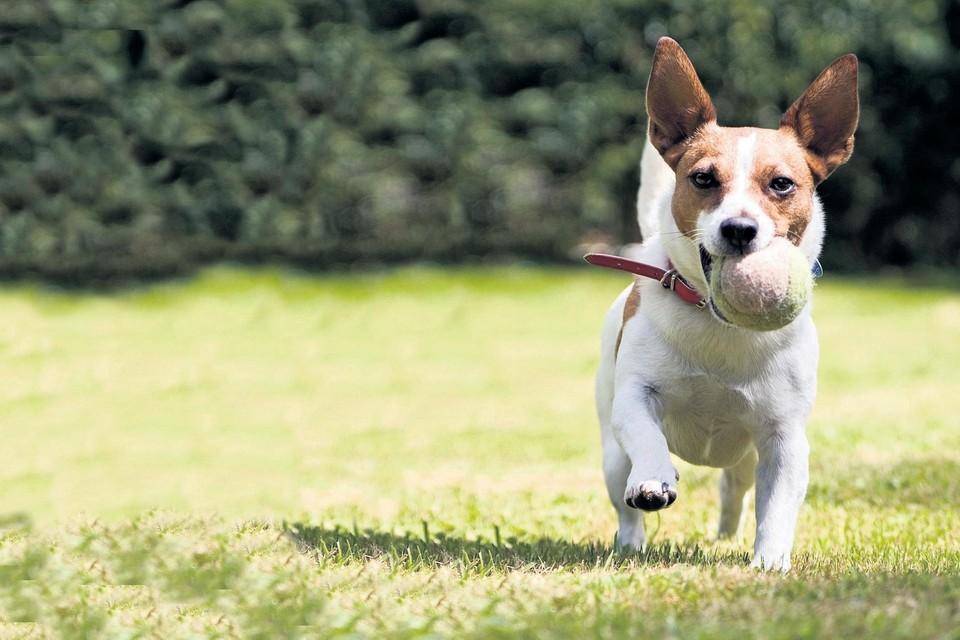 Oopoeh zoekt honden in Leiden en omgeving.