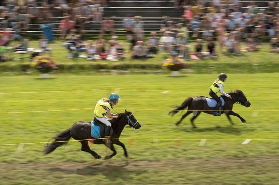 Vijftig jaar ponyrennen in Stompwijk: 'je hoeft niet van paarden te houden'