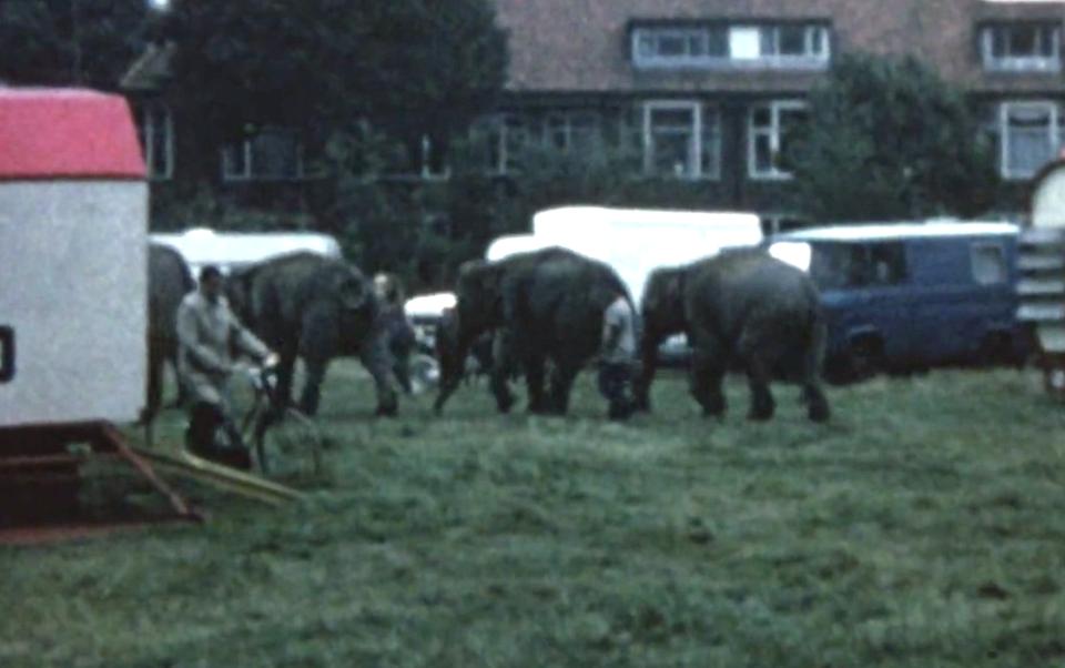 Olifanten bij het Schuttersveld.