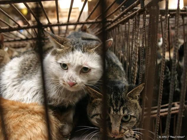 China wil opeten honden en katten verbieden - Leidschdagblad