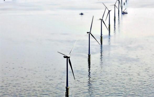 Bouw van windpark bij Hollandse kust is 'desastreus'