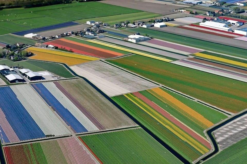 De 2625 hectare bollengrond is niet voor alle Teylingse partijen heilig.