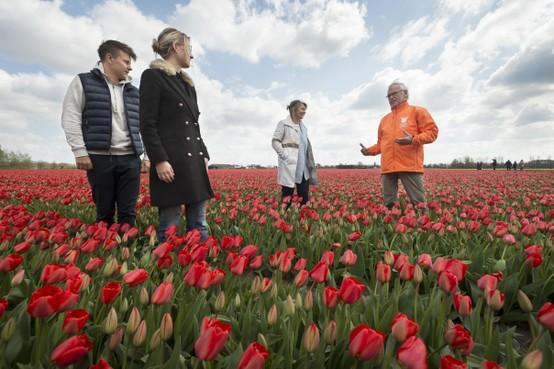 Bollenambassadeurs niet op pad: toeristen opgeroepen om thuis te genieten van de bloemen