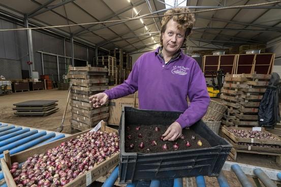 Test nieuwe teelmethode hyacinten: middelenreductie van tachtig procent in 2023