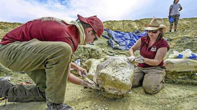Wetenschappers van Naturalis ontdekten vele dino-fossielen en hopen dat ze langnek mee kunnen krijgen naar hun museum