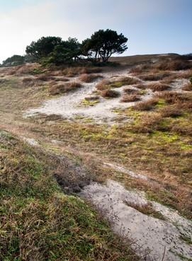 Bouwend Noordwijk baalt: achttien projecten vertraagd of opgeschort vanwege stikstofuitspraak