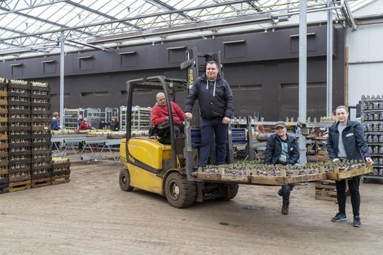 Loeren bij de boeren: Poolse handen onmisbaar voor Flowerboost