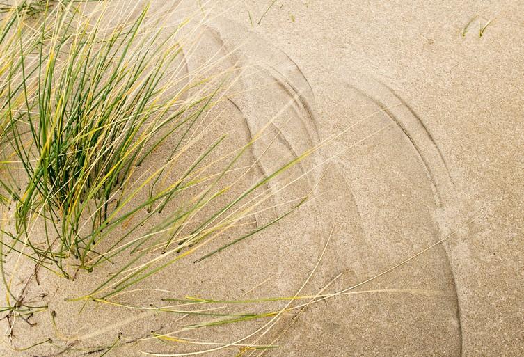 In natuurgebied Noordvoort is de zeewind kapper van duindoorn en vlier