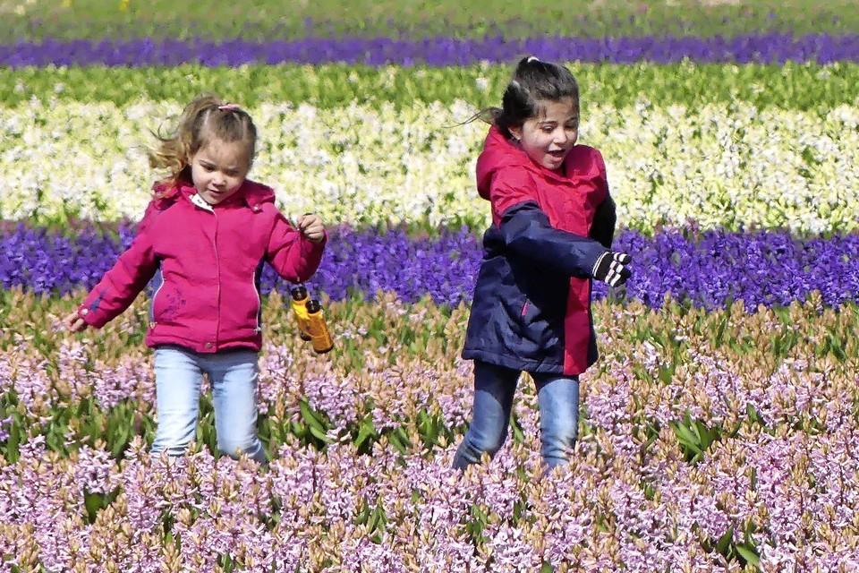 Kinderen tussen de bloeiende hyacinten in Noordwijkerhout.
