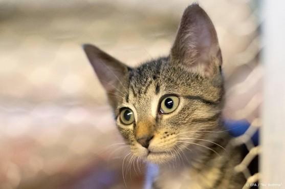 'EU-actieplan nodig tegen illegale handel huisdieren'