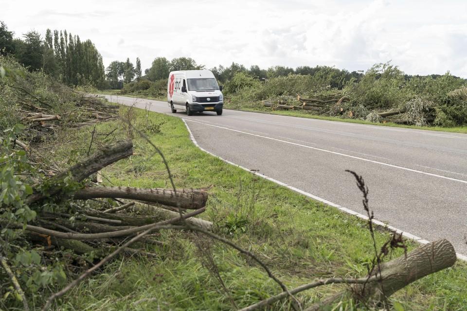 Rijnlandroute: bomenkap langs de Ommedijkseweg.
