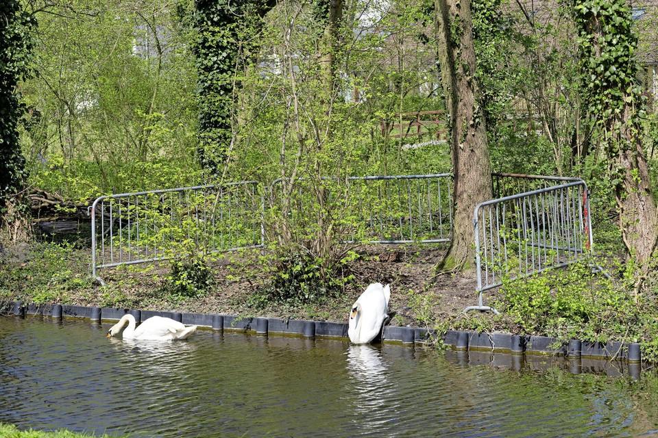 Op verzoek van de buurt plaatste de gemeente hekken rond het nest van het vrouwtje.