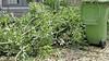Leiderdorp haalt vanaf 7 juli weer groenafval op
